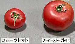 tomato1504060747_010