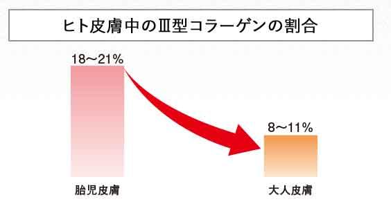 Ⅲ型コラーゲンの減少