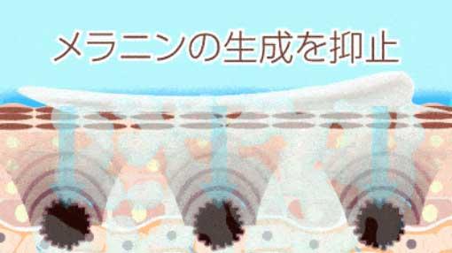 メラニン細胞を抑制してシミを防ぐ