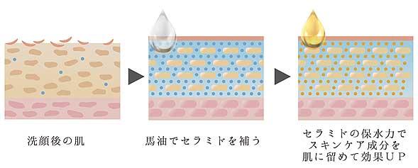 セラミド 化粧水・美容液の成分を肌に留める