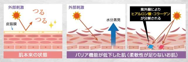 バリア機能が低下で様々な肌トラブル