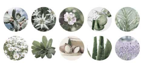 10種類のオーガニックエキス