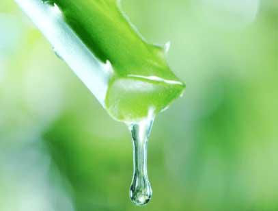 アロエベラ液汁配合